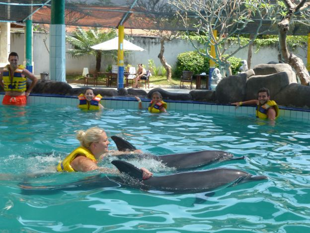 Swimming with dolphins - Photo 5