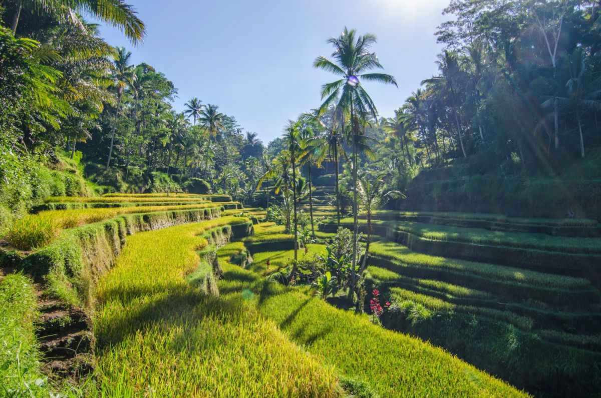 Madani Antique Villas Ubud - Photo 7