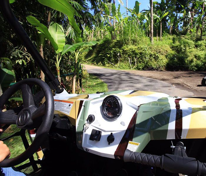 Jungle Buggies - Photo 7