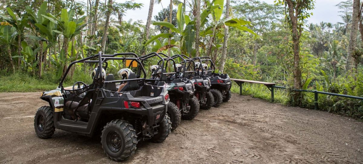 Jungle Buggies - Photo 11