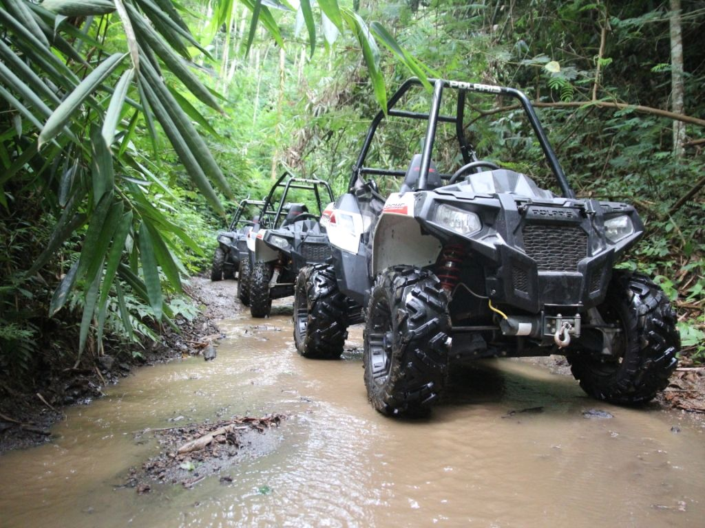 Jungle Buggies - Photo 9