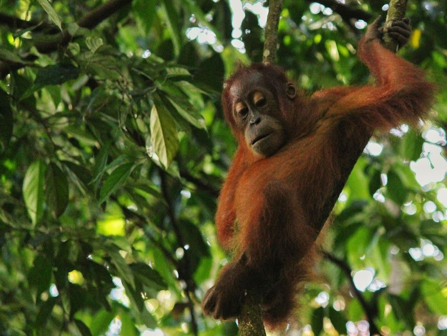 Natural Beauty Of Sumatra - Photo 10
