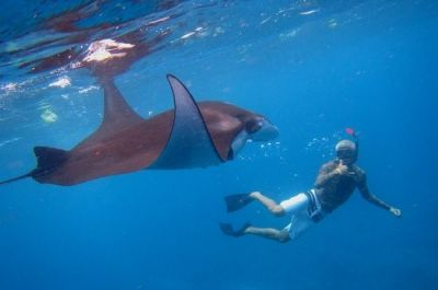 Diving in Manta Point (Nusa Penida)