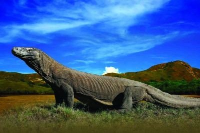 Virgin Nature of Komodo