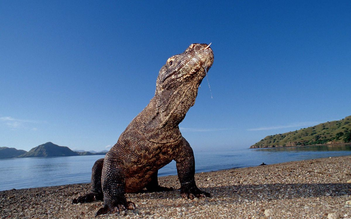 Virgin Nature of Komodo - Photo 1
