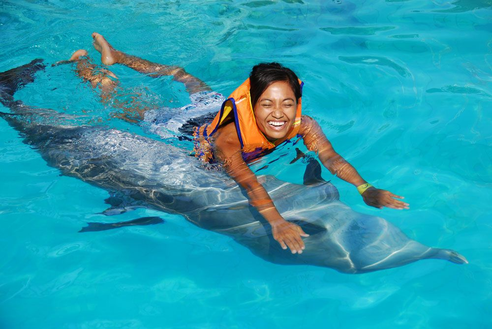 Swimming with dolphins - Photo 1