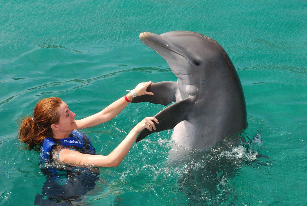 Swimming with dolphins - Photo 2