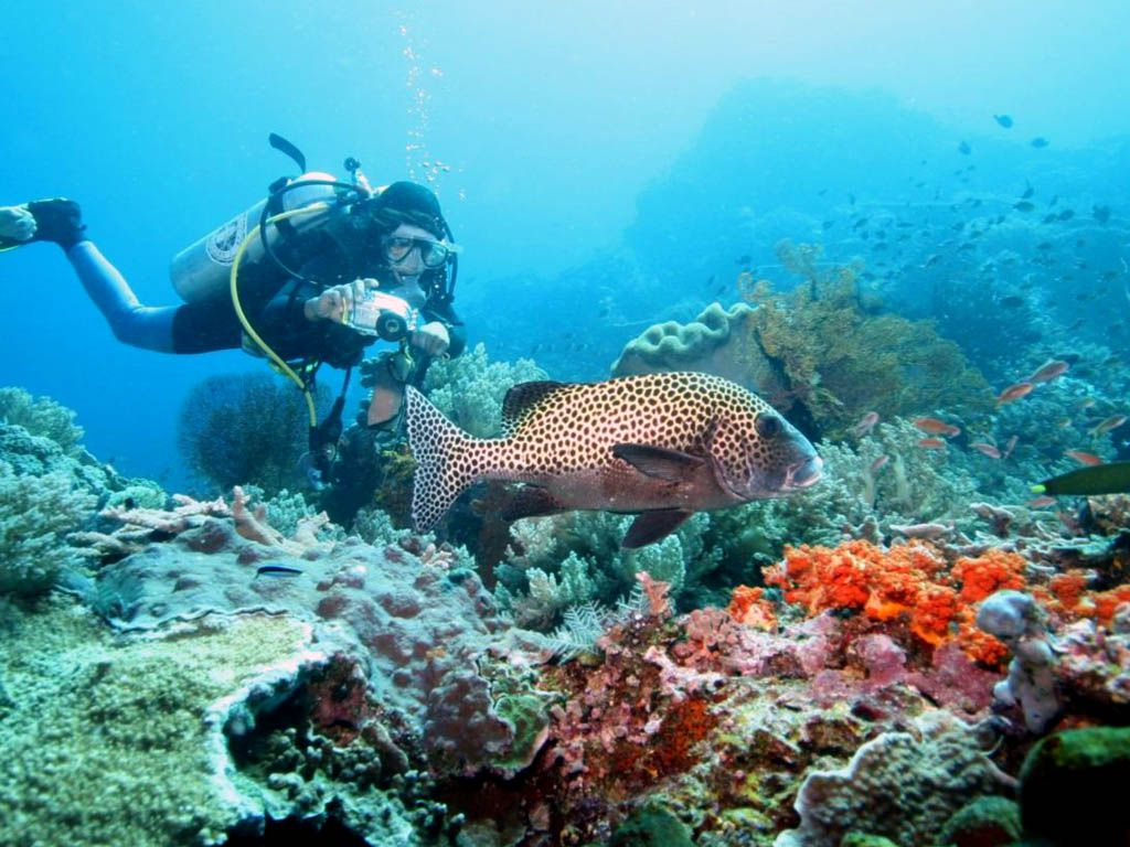 Diving Nusa Dua - Photo 2