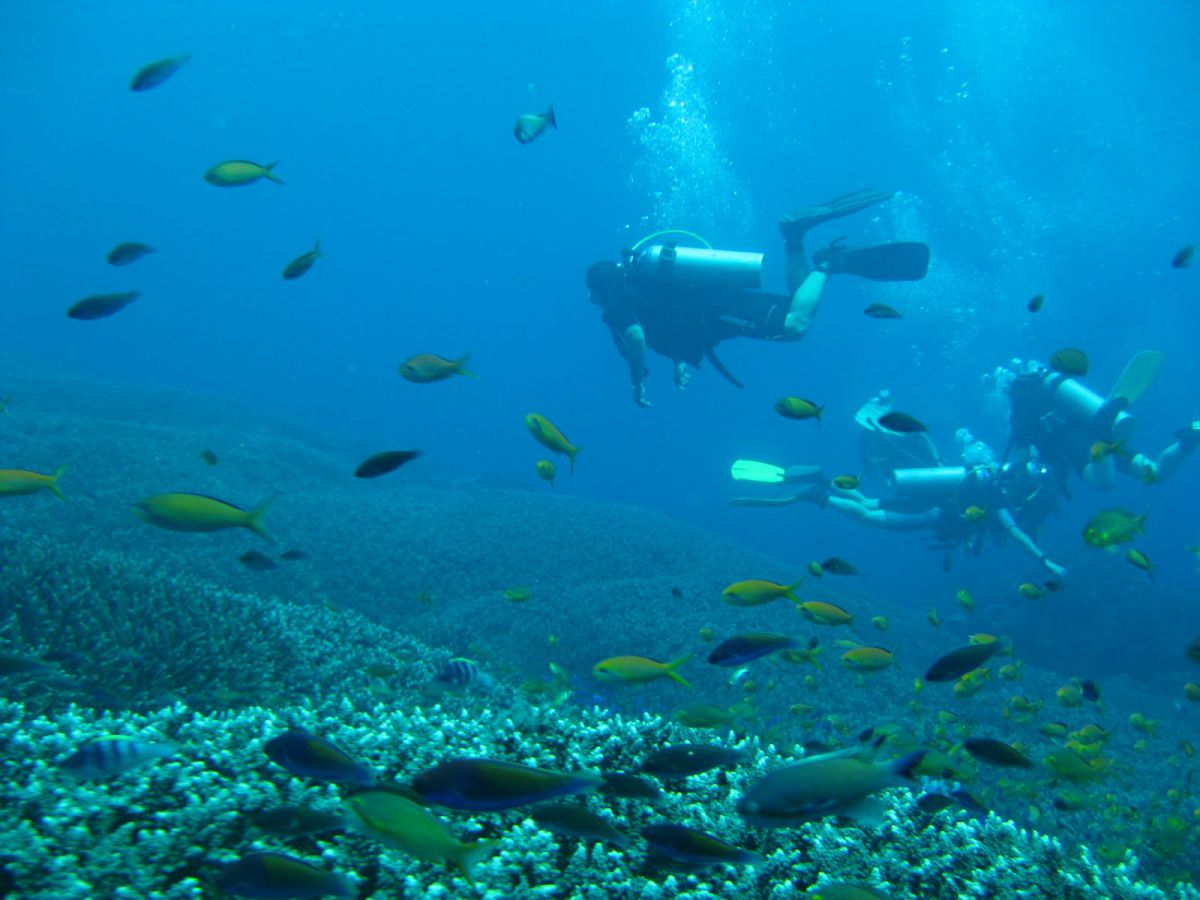 Diving Nusa Dua - Photo 5